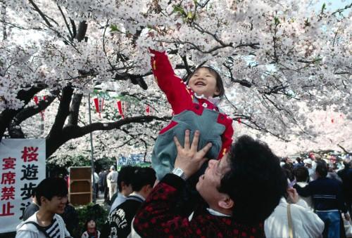 http://blog.neoamusement.com/en/japan-life-2/hanami-2/